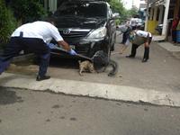 Clean rabies in Jakarta, Indonesia