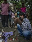 Festival Of The Hindu Snake Godness ''Manasha'' In India