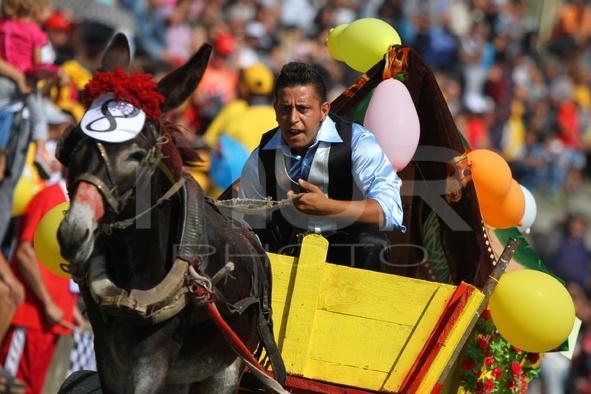 Bulgaria Donkey Exhibition Race Competition