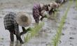 Farmer Workers in Myanmar